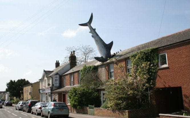 Shark in Roof - The Property Blog