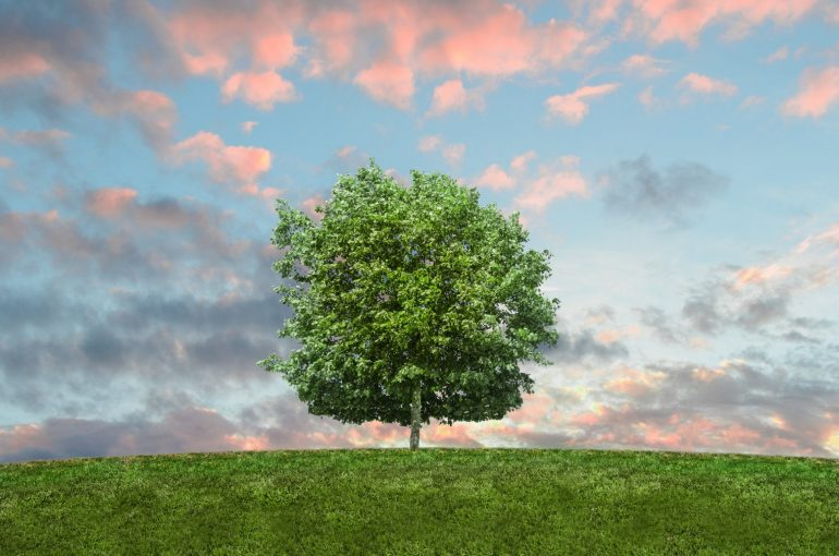 Should your next property be eco-friendly? - The Property Blog